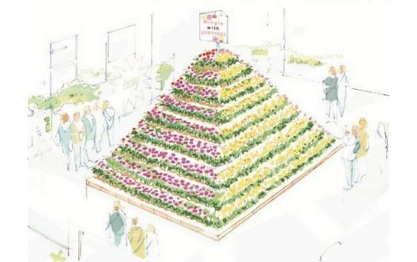 Florist Holland gerbera pyramid, garvinea sweet series