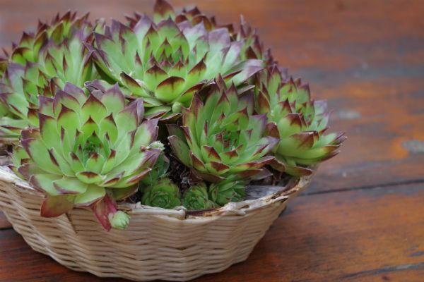 Keep your houseplants looking perfect - expert growing tips