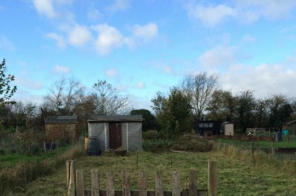 Invigorating blue sky down on the allotment, Annabelle Padwick, Life at No 27