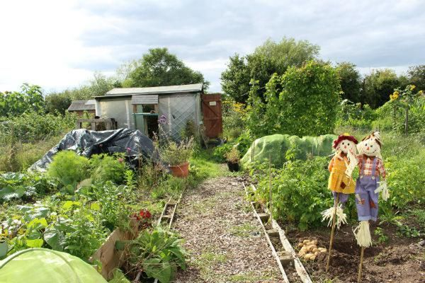 looking good on the allotment - life at no.27 Annabelle Padwick