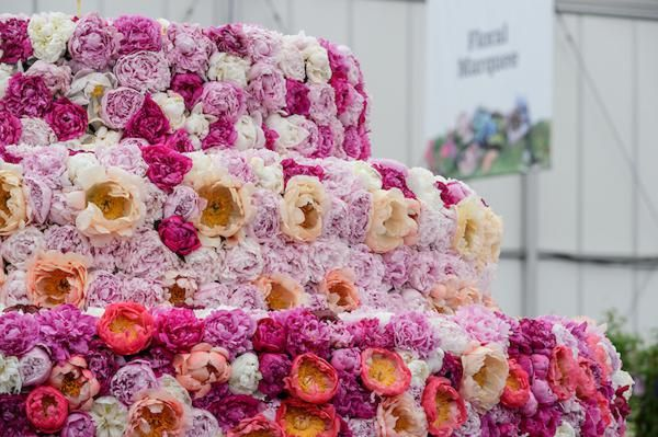 Primrose Hall Nursery, peony, paeonies in the Floral Marquee FM70 at BBC Gardeners' World Liven 2018