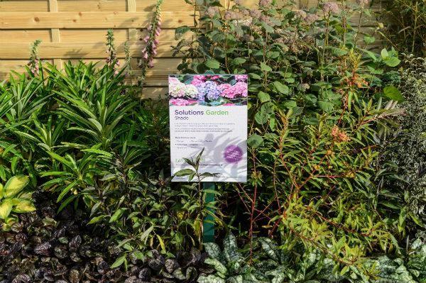 Wyevale Garden Centres Solutions Garden, Shade border, platinum award