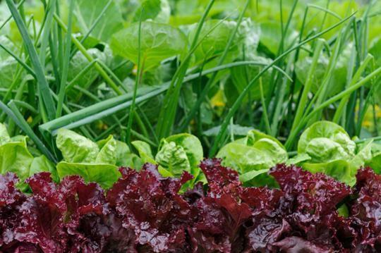 Grow your own veg, salad leaves, asparagus, tasty GYO Home produce