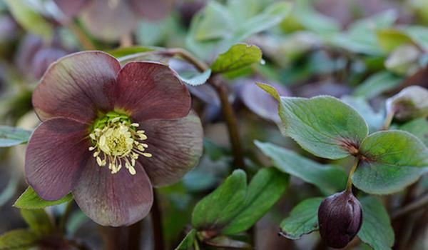 plant of the month february