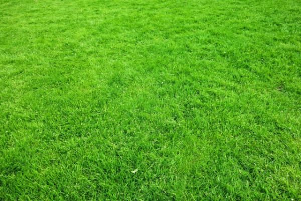 GreenThumb, sponsors of Problem Solved! lawn tips and advice