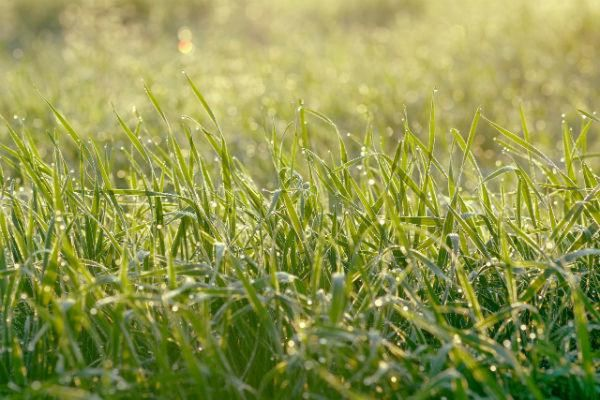 GreenThumb, Problem Solve! sponsor, expert tips, advice for perfect lawns