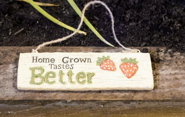 home grown tastes better - allotment veg patch sign - bbc gardeners' world live