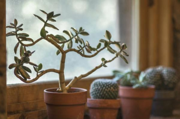 let your houseplants rest in winter - expert growing tip