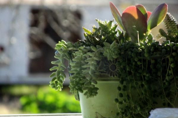 Top five tips for growing weird and wacky houseplants