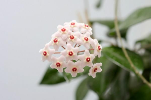 Top five tips for growing happy houseplants image