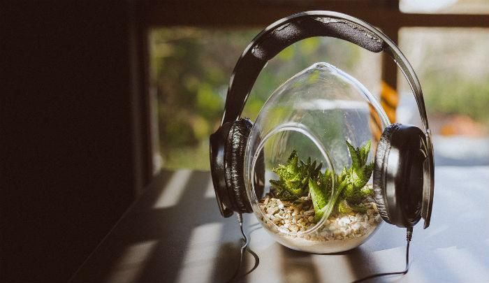 Music to garden to, the experts choose their top tracks for gardening to