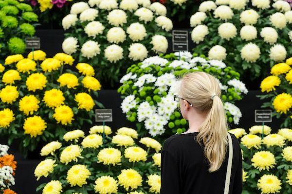 Chrysanthemums Direct at BBC Gardeners' World Live