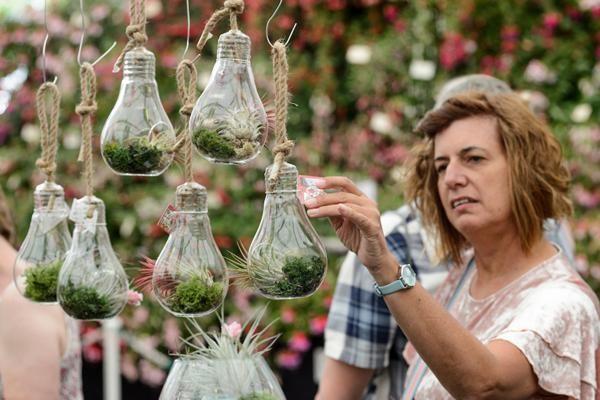 Air Plants at BBC Gardeners' World Live