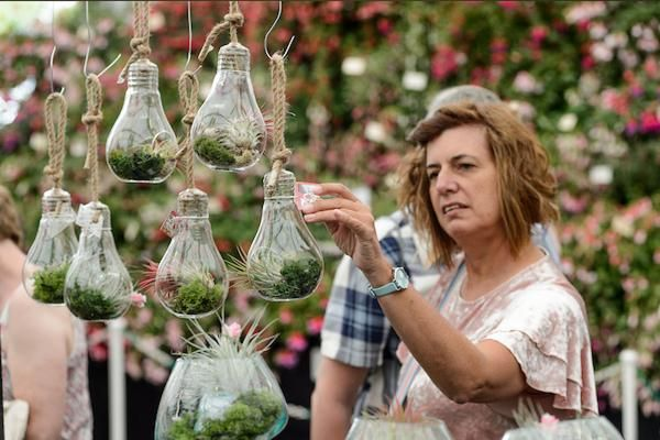 Every Picture Tells a Story - photo of visitors in the Floral Marquee