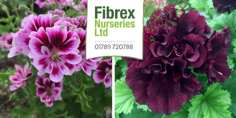 fibrex nurseries gift vouchers, great christmas present