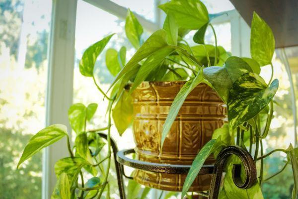 indoor houseplants