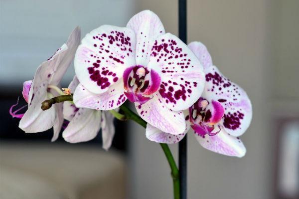 orchid indoor gardening