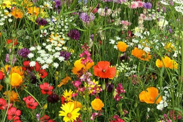 Mothers day gift idea - Pictorial Meadows