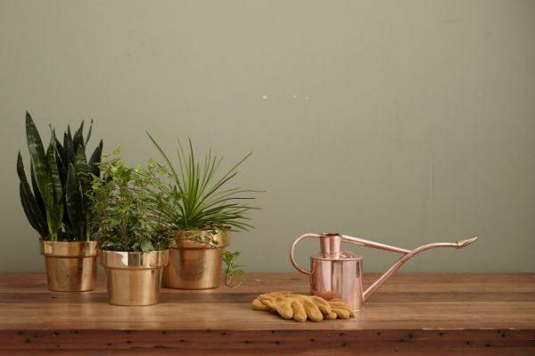 indoor gardening, watering techniques