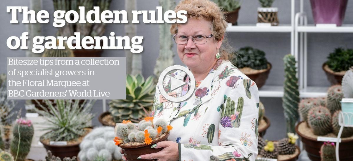 craig-house-cacti-golden-rules-of-gardening