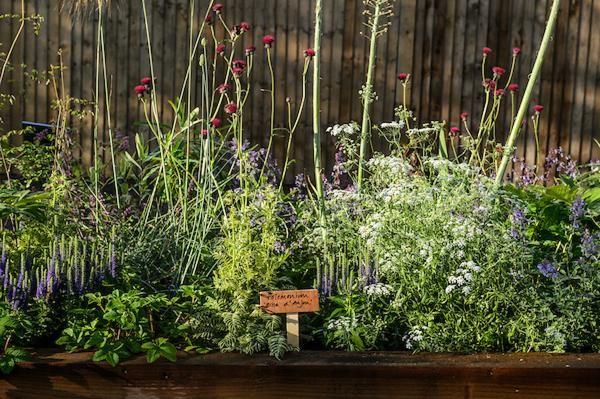 Jane Scott-Moncreiff Garden Design
