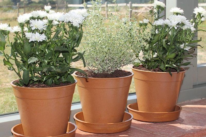 Mr Fothergills bamboo pots