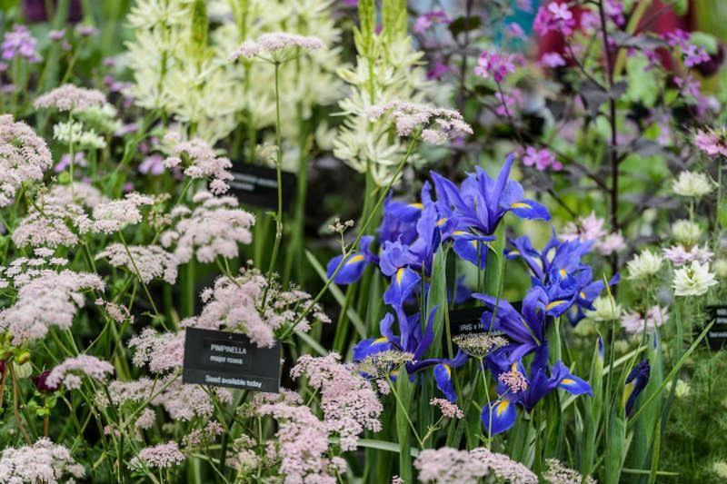 Avon Bulbs at BBC Gardeners' World Live, Floral MArquee