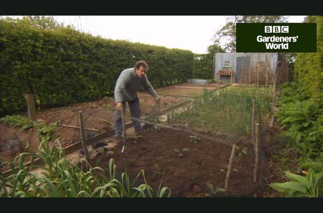 Monty Don growing cauliflower - tips video