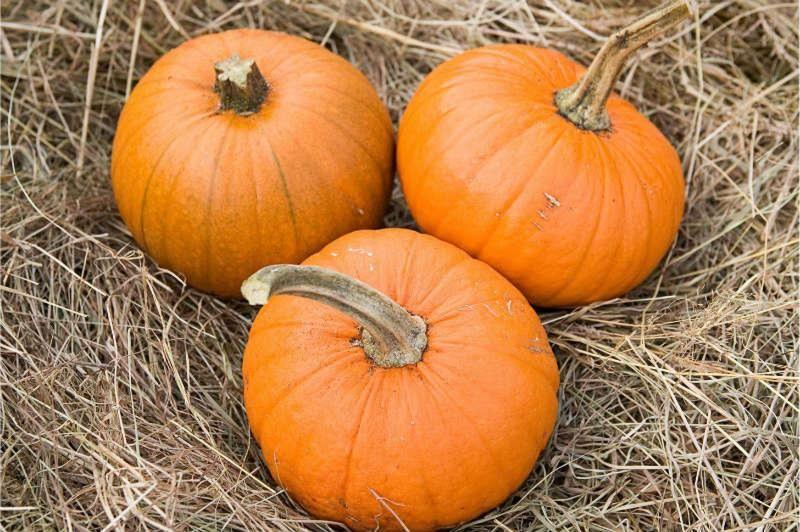 pumpkin becky