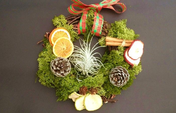 Air Plant wreath - Every Picture Tells a Story - Christmas gift idea