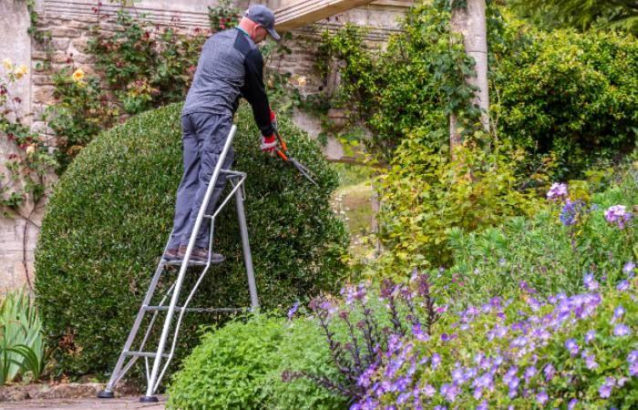 Henchman ladders - gift idea for gardeners