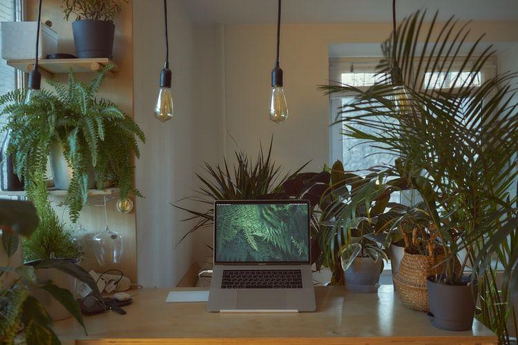 desk gardening