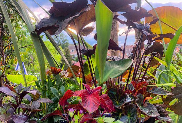 kate mason plants