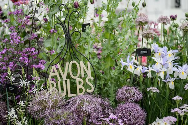 Avon Bulbs in the BBC Gardeners' World Live Floral Marquee