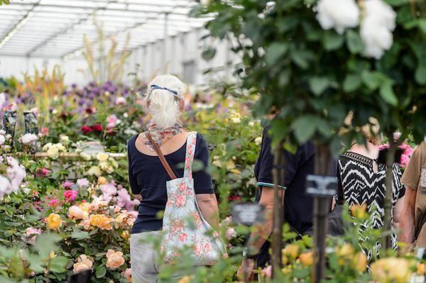 Roses at bbc gardeners world live