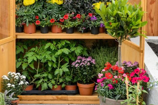 Grow your own fruit in containers