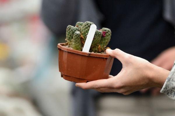 cacti house plant indoor gardening
