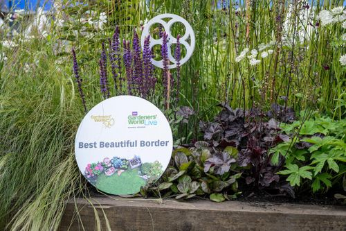 Best Beautiful Border Award 2017