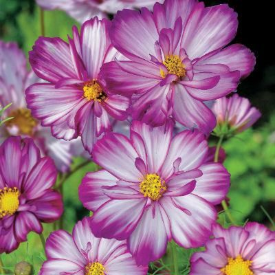 Mother's Day Gift Guide for gardeners