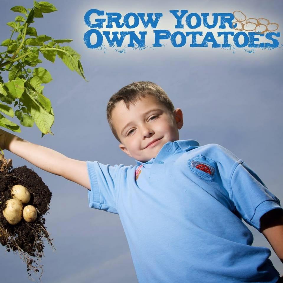 Schools take on the potato growing challenge!