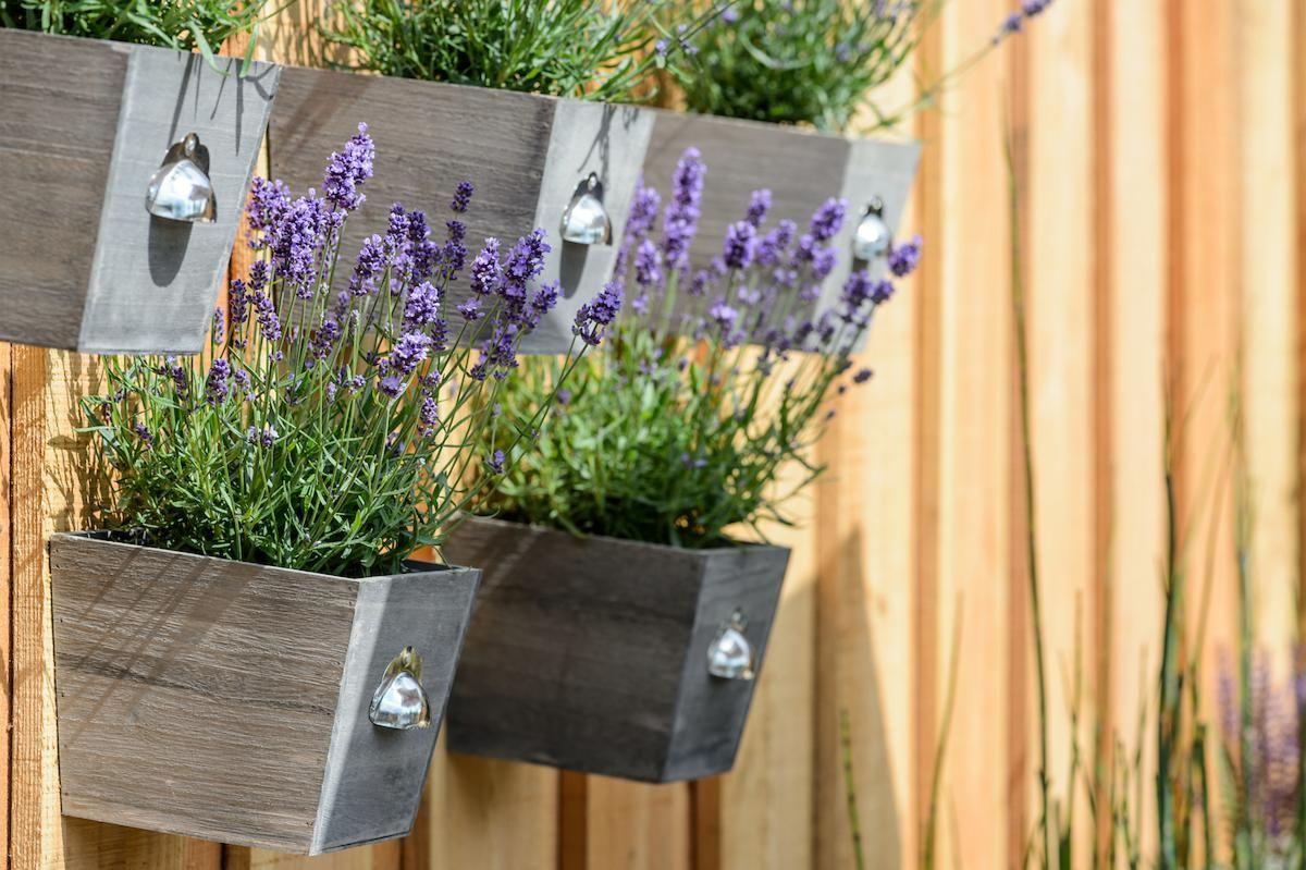 Homegrown teas - 2019 gardening trend