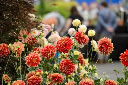 A Garden Lover's Diary – July