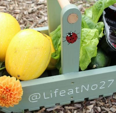Starting your first allotment