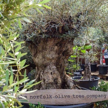 Exhibitor spotlight - The Norfolk Olive Tree Company