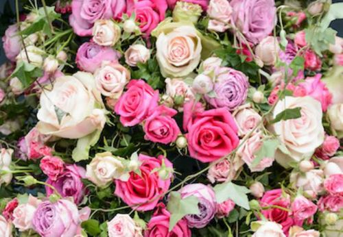 Roses are red, roses are blue and we've got a Rose Festival just for you!