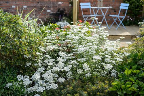 A Garden Lover's Diary – August