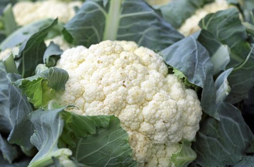 Cauliflower - grow and eat