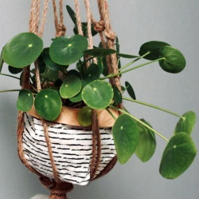 Watering and feeding your houseplants