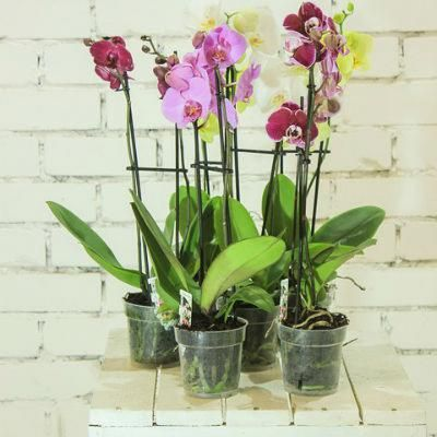 Caring for orchids