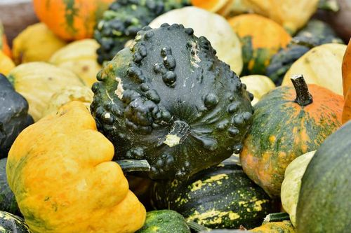 Pumpkins, grow and eat with Jack Stein's maple roasted pumpkin recipe